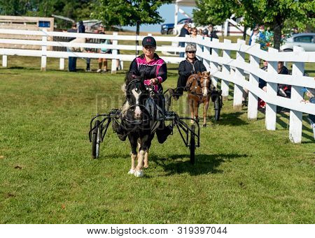 Dundas, Prince Edward Island / Canada - August, 25, 2019 Competitors circling the ring at the minature horse competition at the PEI Plowing Match and Agricultural Fair