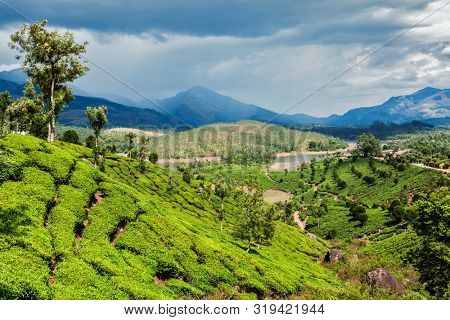 Green tea plantations in hills with dramatic sky. Munnar, Kerala, India