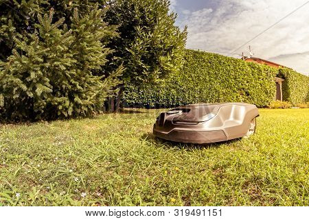 Robotic Lawn Mower Cutting Grass In The Garden.