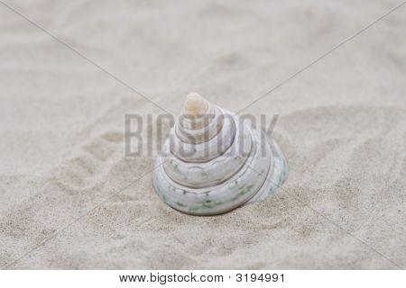 Beautiful Shell On Beach