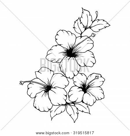Hand Drawn Hibiscus Flowers. Black Outlines Of Hibiscus Flowers On White Background. Beautiful Monoc
