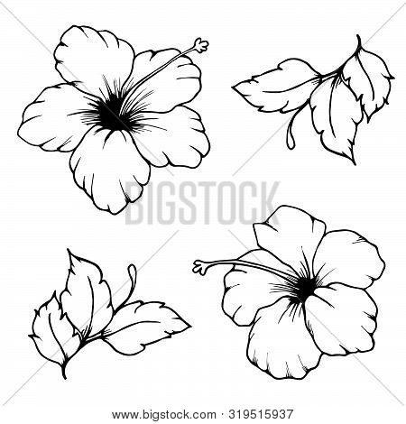 Set Of Vector Hibiscus Flowers And Leaves For Coloring Book. Hand Drawn Hibiscus Flowers. Black Outl