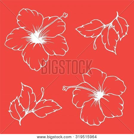 Set of vector hibiscus flowers and leaves. White outline of hibiscus flowers and leaves on pink background. Hand drawn hibiscus.