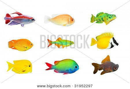 Great collection of a tropical fish on a white background.