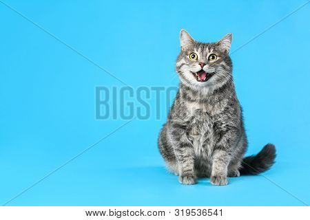 Cute Gray Tabby Cat On Light Blue Background, Space For Text. Lovely Pet