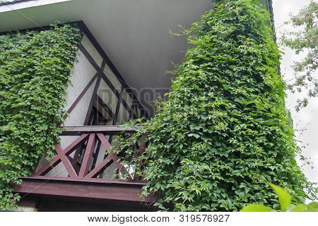 Wooden Building Balcony Covered With Green Ivy.  House Build With Traditional German Arhitechture El