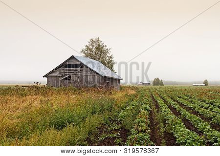The Mist Covers The Barns On The Fields Of The Northern Finland.