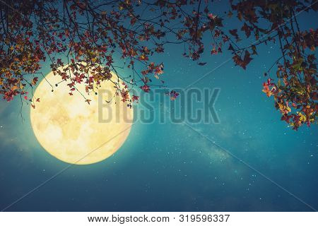 Beautiful Autumn Fantasy - Maple Tree In Fall Season And Full Moon With Star. Retro Style With Vinta