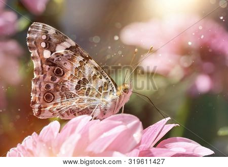 Beautiful Painted Lady Butterfly In Sunny Summer Garden Fantasy Macro Close-up