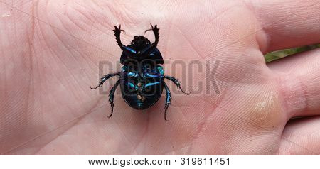 Beetle On The Hand. Man And Insects.