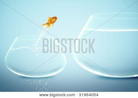 Goldfische in kleinen Goldfischglas gerade Goldfische springen in großen Goldfischglas