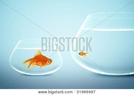 Grandes y pequeños peces de colores
