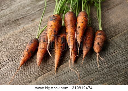 Bunch Of Fresh Unwashed Carrots With Greens On Old Wooden Planks, Close Up View