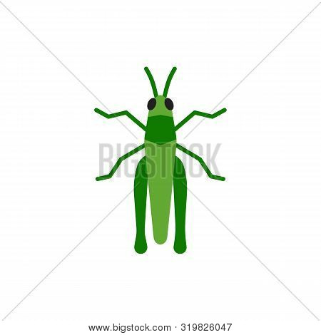 Grasshopper Single Flat Icon. Insect Simple Sign In Cartoon Style. Cricket Bug Pictogram Wildlife Sy