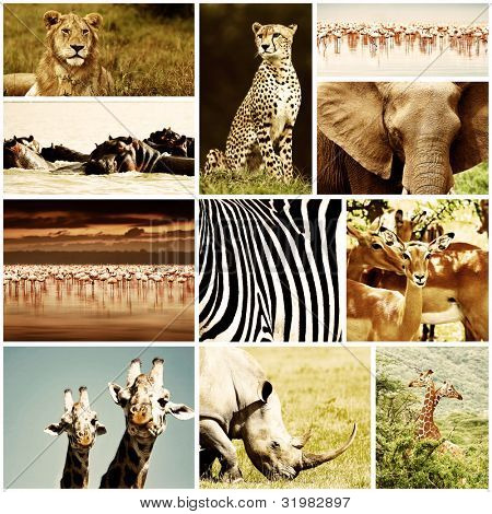 African wild animals safari collage, large group of fauna diversity at African continent, natural themed collection background, beautiful nature of Kenya, wildlife adventure and travel poster