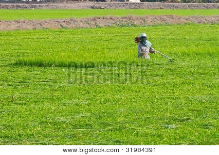Farmer in the farm