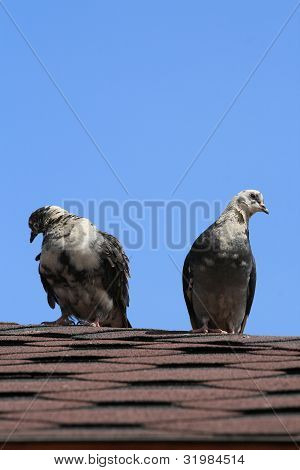 Two doves sitting on the roof