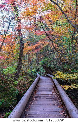 Oirase Stream Pathway, Beautiful Fall Foliage Scene In Autumn Colors. Forest, Flowing River, Fallen