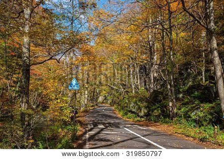 Asphalt Road Beside The Oirase Stream, Beautiful Fall Foliage Scene In Autumn Colors. Forest, Flowin