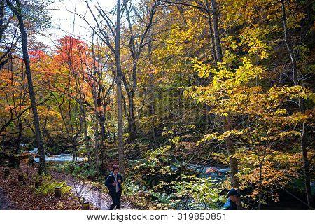 Oirase Stream, Beautiful Fall Foliage Scene Autumn Colors. Famous And Popular Destinations. Flowing