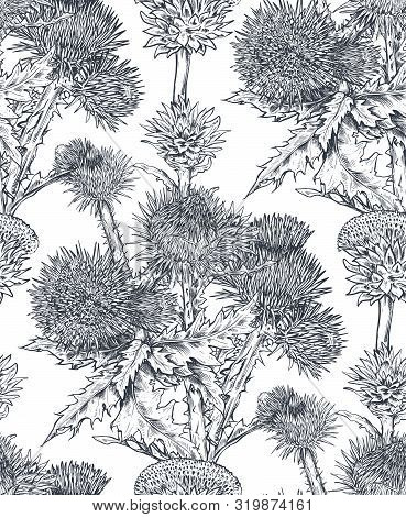 Vector Seamless Pattern With Hand Drawn Thistle Or Carduus Plant, Leaf, Bud And Flower.