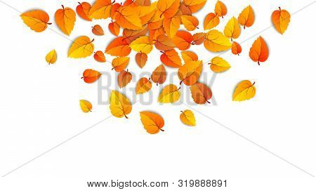 Autumn Falling Leaves Isolated On White Background. Autumnal Round Yellow Leaf Fall Down, Tree Folia