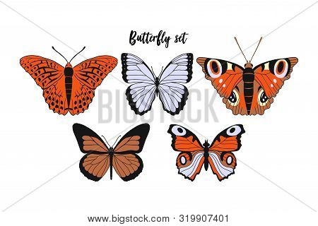 Set Of Realistic Flat Cartoon Vector Different Butterflies On White Background: Monarch Butterfly, A