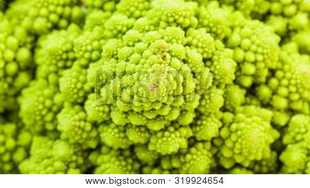 Natural Food Panoramic Background - Surface Of Fresh Romanesco Broccoli Cabbagehead Close-up