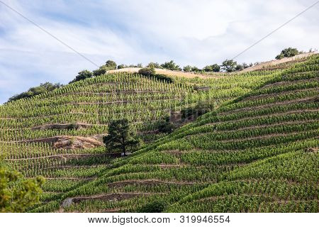 View Of The M. Chapoutier Crozes-hermitage Vineyards In Tain L Hermitage, Rhone Valley, France