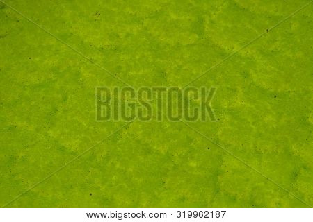 macro closeup of the leaf of a victoria queen water lily, tropical aquatic plant specie from the amazon basin of America, nature detail background poster