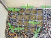 Jung cannabis plants macro background green house marihuana babies prints poster