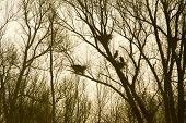 Heronry in trees in nature with backlight in early morning poster