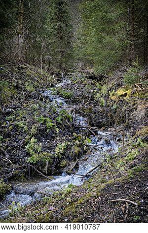 Water Stream In Forest, Big Fatra Mountains, Slovak Republic. Hiking Theme. Seasonal Natural Scene.