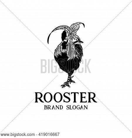 Rooster Design Vector. Illustration Rooster Logo Vector