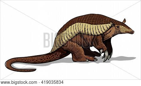 A Giant Armadillo With Thick Legs Stands On The Ground. Big Fat Animal. Mouse, A Rodent With A Long