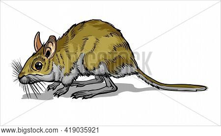 Light Small Jumper. A Jerboa, A Small Animal, A Field Yellow Mouse With A Very Long Tail. Mouse, A R