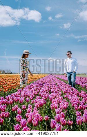 Tulip Field In The Netherlands, Colorful Tulip Fields In Flevoland Noordoostpolder Holland, Dutch Sp