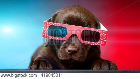 Puppy Of Labrador Retriever Dog Watching  Tv Or Movie Film  With 3d Glasses (red-blue Anaglyph).