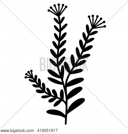 Vector Botanical Illustration Of A Branch With Small Leaves. Isolated Icon On White Background. The