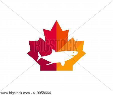 Maple Shark Logo Design. Canadian Shark Logo. Red Maple Leaf With Shark Vector