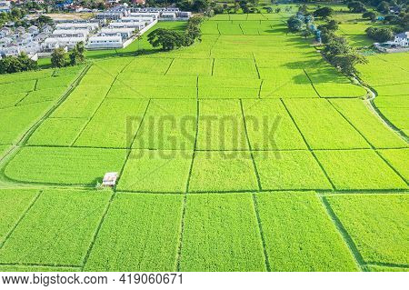 Cultivated Land And Land Plot Or Land Lot. Consist Of Aerial View Of Green Field, Agricultural Plant