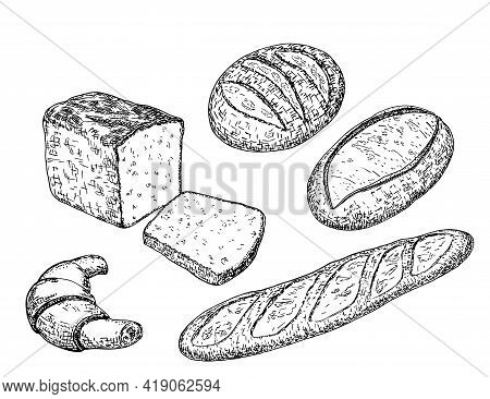 Bread Sketches With Long Loaves, Baguette, Wheat And Rye Bread, Croissant. Bakery And Pastry Product