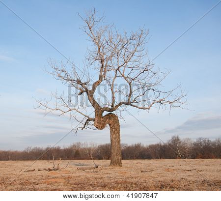 Crooked tree growing in an open field - concept of perseverance despite difficult conditions poster