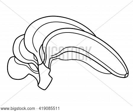 Bananas For Coloring Book. Bunch Of Ripe Bananas Vector Linear Illustration For Coloring. Outline Sw