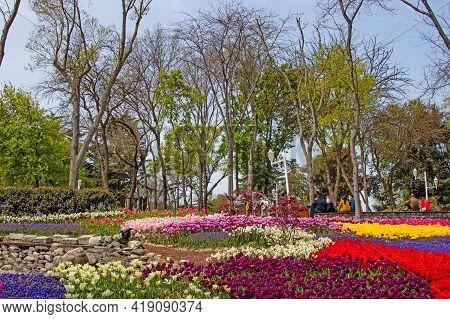 Emirgan,istanbul,turkey-april 28,2021. Tulip Festival Organized In Istanbul.the Tulip Festival View