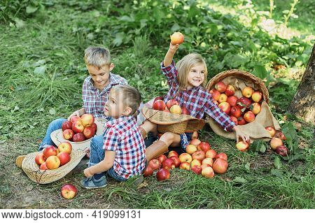 Apple Picking. Happy Children Harvesting Apples In Orchard