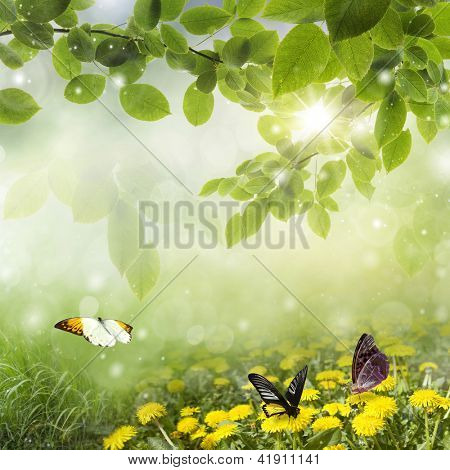 Fresh Spring bokeh: dandelions with butterfly in the meadow