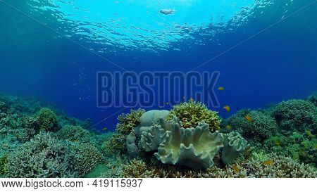 Tropical Fishes And Coral Reef At Diving. Beautiful Underwater World With Corals And Fish. Philippin