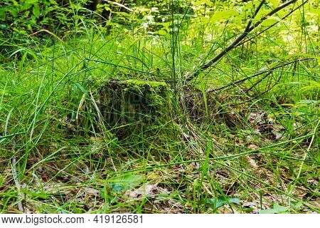 Vegetative Background From Leaves And Plants. Lush, Natural Foliage. Green Vegetation