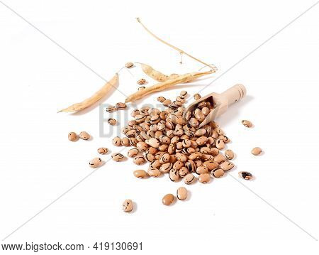 Ripe Grain Beans. Beige And Brown Speckled Beans. Dry Beige Pods.
